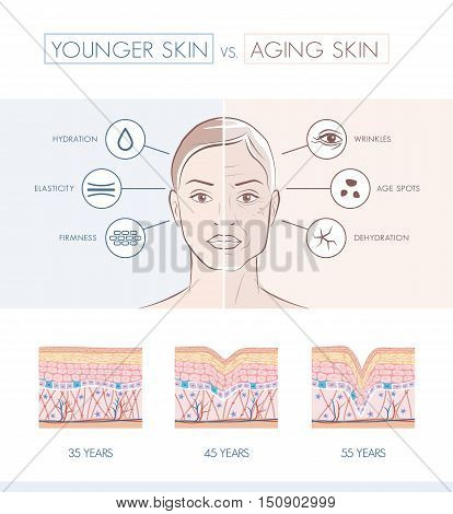 Young healthy sking and older skin comparison skin layers and wrinkles diagram