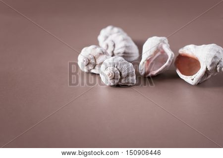 pile of seashells on a table with free space for text.
