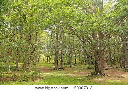 Sant Antonio woods in Pescocostanzo - Italy