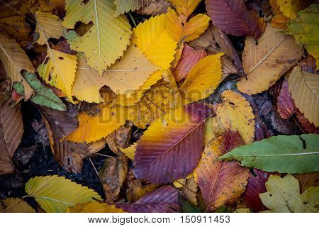 nice autumn abstract background with dry leafage