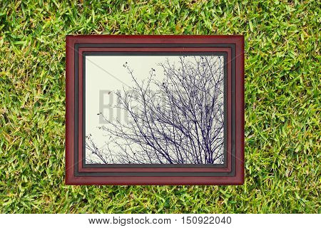 Wooden frame with view of dry branch of af tree on green grass wall background.