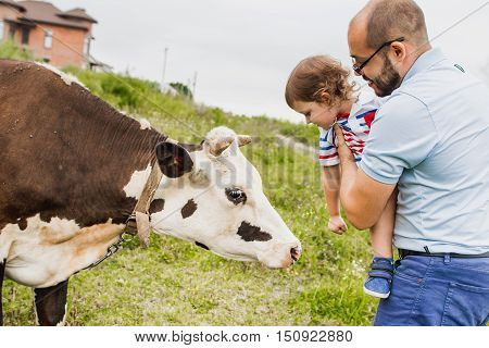 Happy child with his father at the hands of feed touch a cow in the meadow. Pope introduces young son with a cow. Child and animal friendship. Family fun in the countryside.