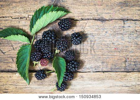 Black Blackberries, Ripe Blackberries, Unripe Blackberries On The Bush, Black Blackberries On An Old