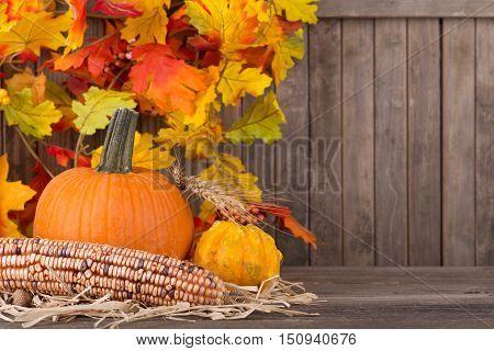 Fall pumpkin squash and corn with colorful leaf dcoration in background