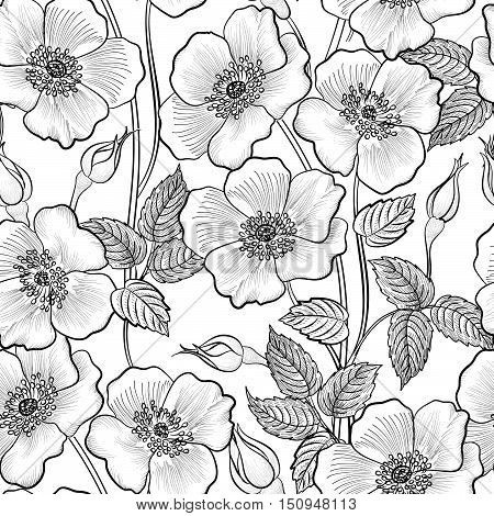 Flower-sketch-background-030A