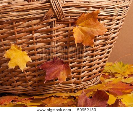 Autumn Basket And Maple Leaves
