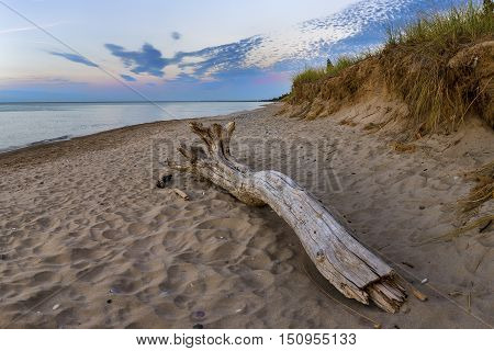 Driftwood On A Lake Huron Beach At Twilight