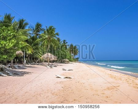 Coconut palms on popular Canto de la Playa in Saona Island, Parque Nacional del Este, East National Park, Dominican Republic. Paradise beach in tropical island with white sand and sunny sky.