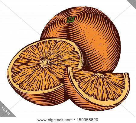 Engraved isolated color old-styled vector illustration of an orange