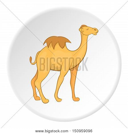 Camel icon. Cartoon illustration of camel vector icon for web