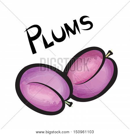Pulms isolated. Plum fruit label design. Hand drawn watercolor berry set with lettering