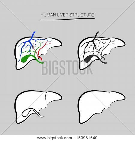 Human liver structure. Human internal organ icons set. Anatomy sign collection