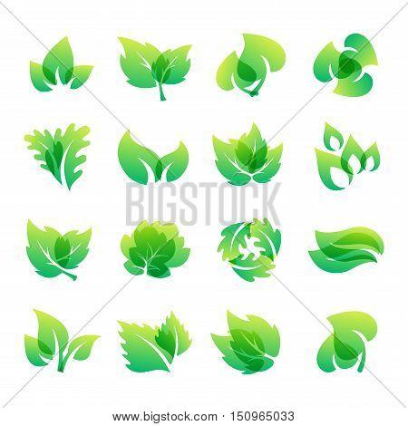 Green leaf eco design element icon. Leaf icon vector illustration friendly nature elegance symbol. Decoration flora leaf icon on white. Natural element ecology symbol green organic icon