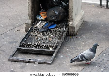 Pigeon in front of open garbage on street