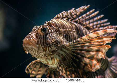 Underwater image of colorful tropical fish closeup