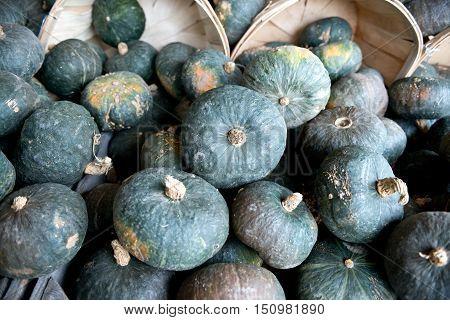 Blue pumpkins patch in bushel baskets just ready for sale