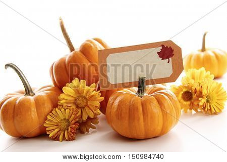 Closeup of mini pumpkins with place card on white