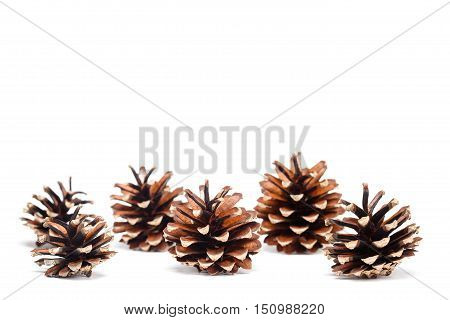 Different pine cones on white. Background isolated objects