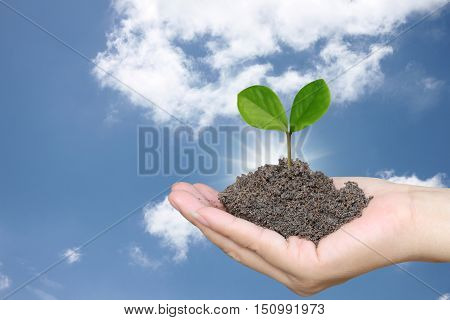 Soil in a Woman hand and treetop on soil with background blue sky in the daytime. poster