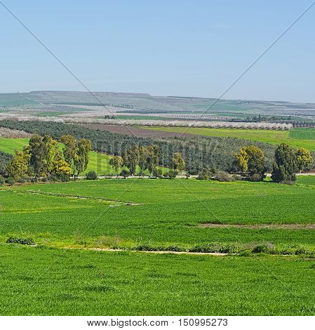 Jezreel Valley at the Foot of the Mount Tabor in Israel