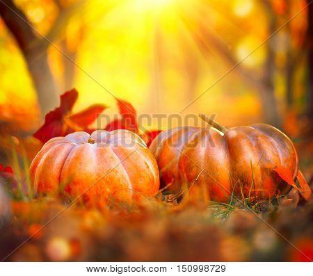 Autumn Halloween Pumpkins. Thanksgiving day background. Pumpkin patch. Beautiful Holiday Autumn festival concept. Fall scene. Orange pumpkin over beauty bright autumnal nature background. Harvest