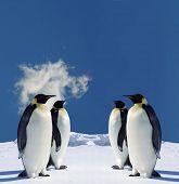 Four Penguins in Antarctica poster