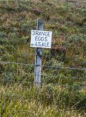 Amusing for sale sign for free range eggs attached to a fencepost at the side of a Scottish farm road with purple heather and grass behind a wire fence poster