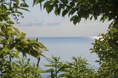 A view of lake erie from Point Pelee National Park in Ontario, Canada. poster