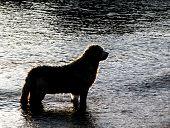 Dog taking a bath poster