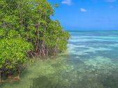 The mangrove of Isla Saona in Parque Nacional del Este, East National Park, Dominican Republic. Saona island is one of the most popular tours starting from Bayahibe, a popular tourist destination. poster
