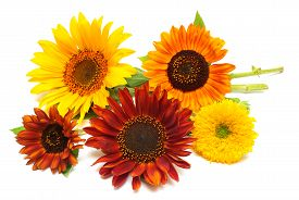 Bouquet of sunflowers flowers red and yellow isolated on white background. Flat lay top view. Teddy Bear