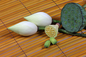 Lotus With Its Bud And Seed
