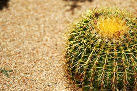Cactus under Sunshine
