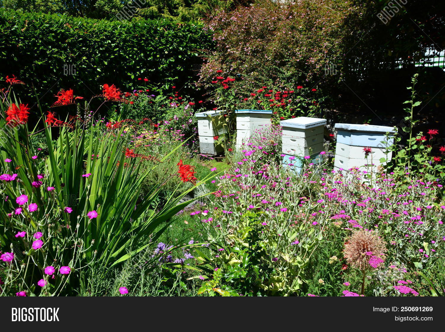 Bee Hives Gardens Image Photo Free Trial Bigstock