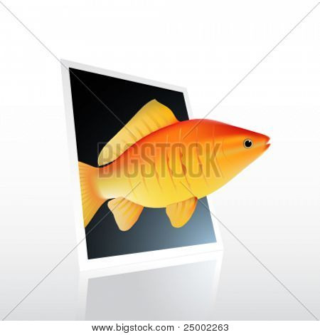 vector fish swimming out of photo