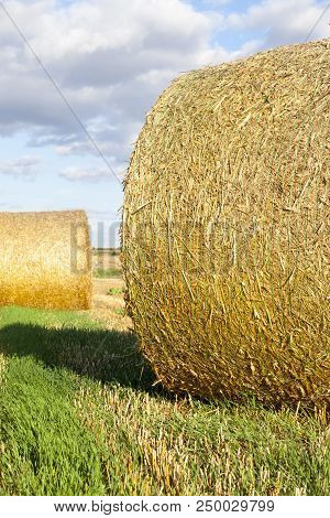 Straw Stacks During Harvest, Left Temporarily On The Field, Summer Photo In Sunny Weather