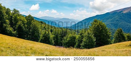 Beautiful Summer Landscape In Mountains. Perfect Countryside Scenery With Beech Forest On A Grassy H