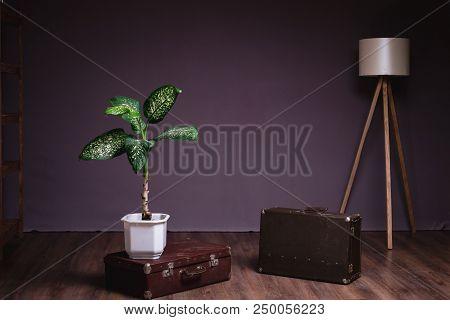 Lamp Loft And Green Flower. Edison Lamp.loft Studio.