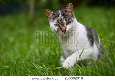 Cute cat looking at camera. Natural light. Domestic cat in the grass.