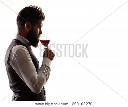 Portrait Of Bearded Man In Suit Which Tasting Wine. Silhouette Of Bearded Man. Wine. Man With Winegl
