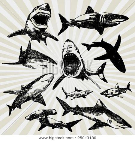 Set of Sharks Hand Drawn