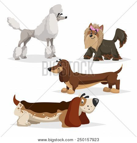 Cartoon Purebred Dogs Set. Poodle, Yorkshire Terrier, Dachshund And Basset Hound. Cheerful And Aodra
