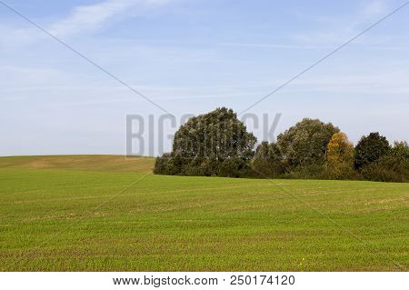 Dull Agricultural Field With Green Vegetation Against The Sky, On The Edge Of The Trees Grow