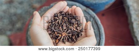Badyan, Anise In Female Hands Against The Backdrop Of Spices. Banner Long Format
