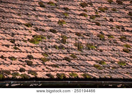 Macro Shot Of Moss Growing On Old Roof Tiles Before Cleaning, Old House Roof Overgrown With Moss And