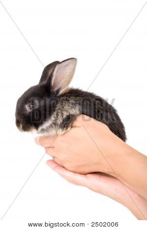 Hands holding a bunny on white background poster
