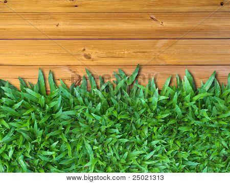 Below Green Grass On Wood