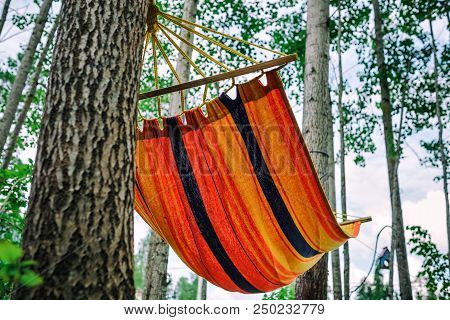 Empty Hammock In The Green Forest. Nobody Is Resting In It. Travel, Adventure, Camping Gear, Nature