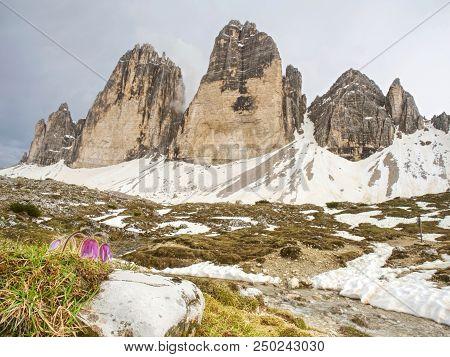 Spring Panorama View To Three Peaks - Tre Cime Di Lavaredo Massive Rock, Sexten Dolomites, South Tyr
