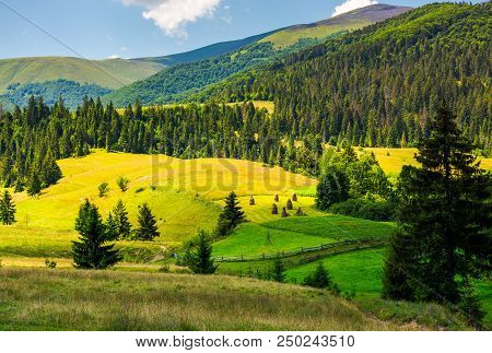 Beautiful Rural Scenery In Mountains. Haystack On The Grassy Agricultural Fields Among The Spruce Fo